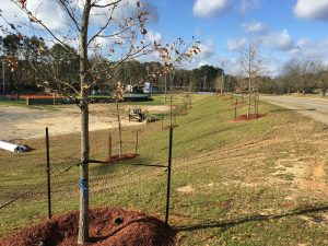 Trees at softball field