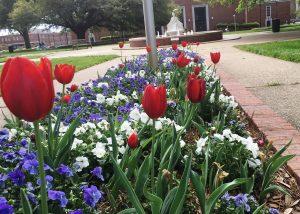 Tech & Tulips 6