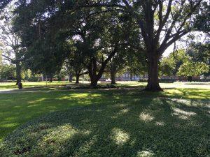 Oaks in Quad 2