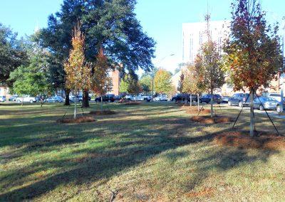 Keeny Circle Trees