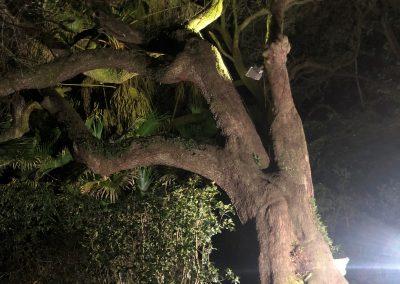 Audubon Park Tree