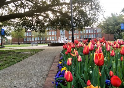 Tulips & Keeny